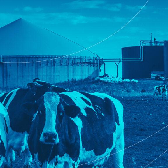 Biogás: conheça essa energia renovável!
