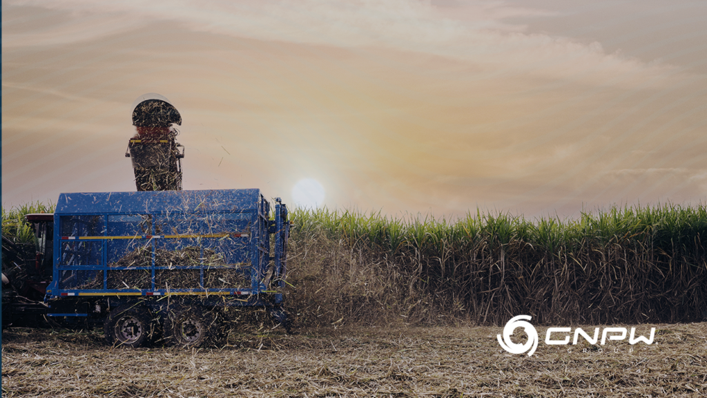 Potential of Biofuels in Brazil